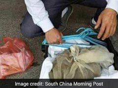 In China, Man Caught With 50 Vipers In His Suitcase