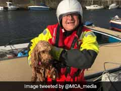 Caught On Camera: Dramatic Rescue Of Pet Dog Swept Out To Sea