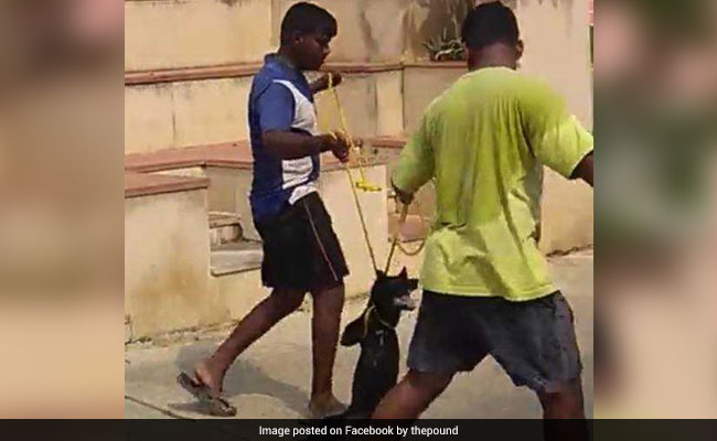 A Year After Dog Thrown From Building, Another Horror Video From Chennai