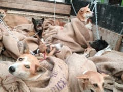 Social Media Tip Offs Leading To More Dog Rescue From Meat Traders