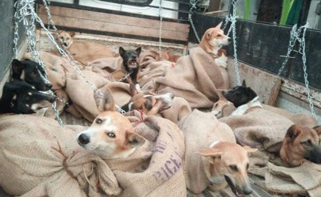 कुत्तों के घेरने पर भागे नहीं, जानिए जब अकेले हों तो कैसे करें अपना बचाव