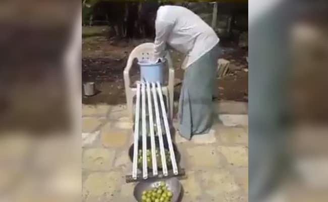 VIDEO में देखें नींबू छांटने के लिए किसान का ये अनोखा जुगाड़