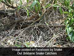 World's 2nd Most Venomous Snake Is Hiding In This Pic. Can You See It?