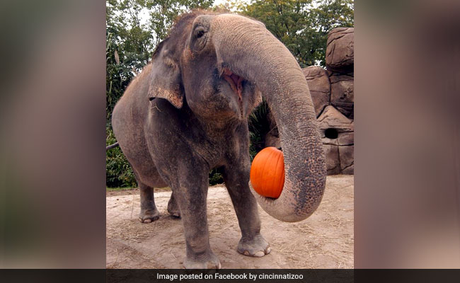Halloween 2017: It's A Pumpkin Party For Animals At These Zoos