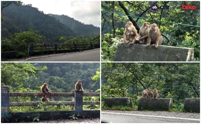 honda d2d chapramari monkeys