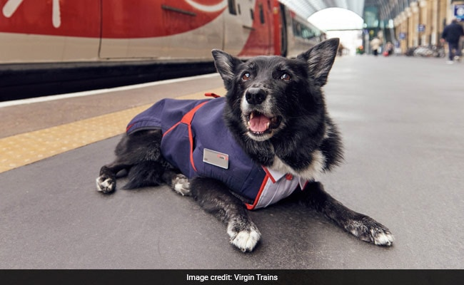 Train-Loving Dog Gets His Own Uniform. Picture Paw-fect!