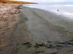 World's Deepest Lake Undergoing Gravest Crisis In Recent History