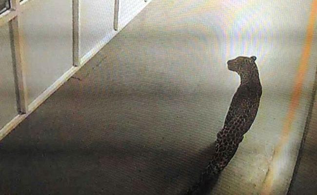 गुरुग्राम के मानेसर स्थित मारुति सुजुकी के प्लांट में घुसा तेंदुआ, तलाश जारी