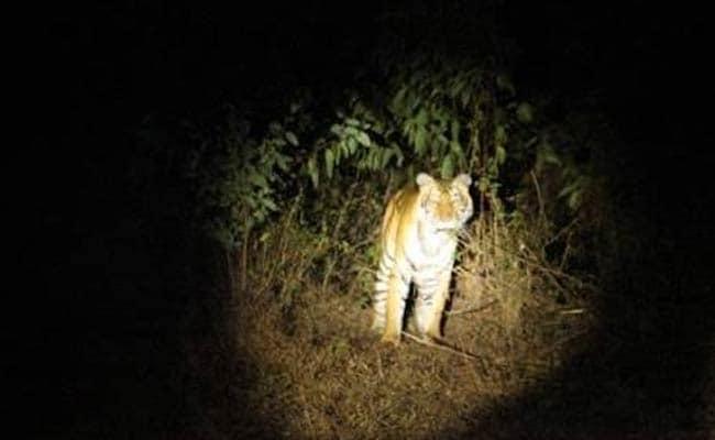 अमरावती : नरभक्षी शेरनी ने दो लोगों की ली जान, लोकेशन चिप लगी होने पर भी नहीं पकड़ पा रही है टीम