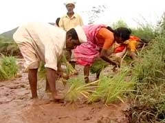 Drought-Hit Maharashtra Farmers Given Rs 4,461 Crore: Government