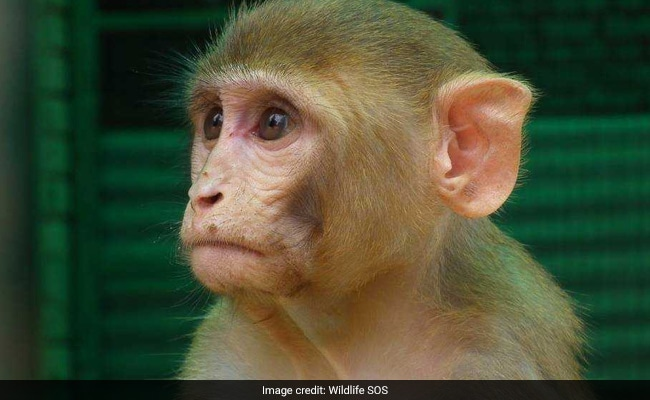 How An Injured Monkey Was Rescued From Rashtrapati Bhavan