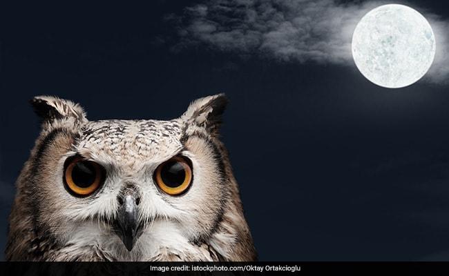 ये जानवर दिखे तो समझ लीजिए आने वाली हैं मां लक्ष्मी, जरूर होगी धनवर्षा!