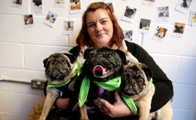 Hugs For Pugs At London's Latest 'Pup-Up' Cafe