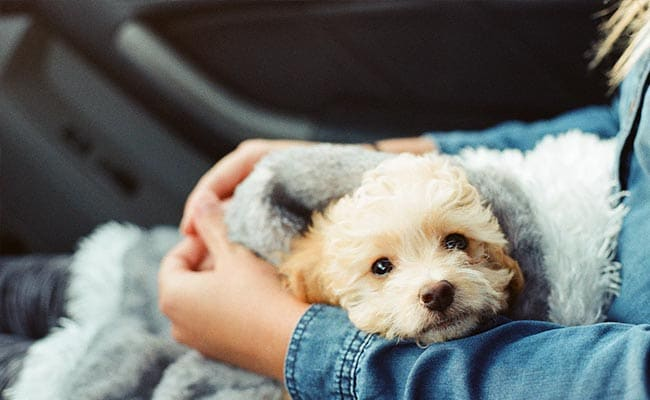 In A First, Italian Woman Gets Paid Leave To Look After Sick Dog