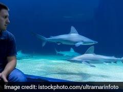 'Shark' At Aquarium Charges At Man, Cracks Glass. Watch His Reaction