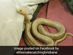 Couple Finds Deadly Snake In Bed. Photos Will Haunt Your Dreams