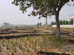 Produce 21 Farmers You Helped To Stop Stubble Burning: Green Court To Punjab