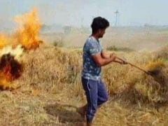'Have No Choice': Farmers Openly Defy Court Order On Stubble Burning