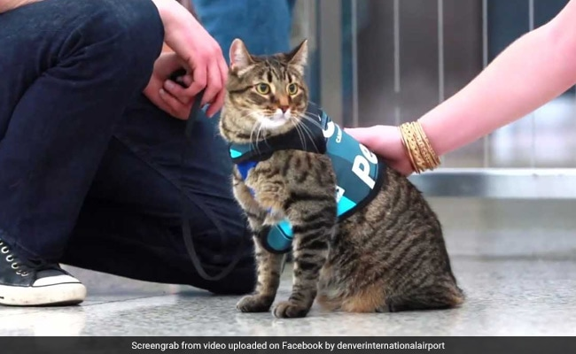 Watch: Denver Airport's Therapy Dog Squad Gets New Member - A Cat