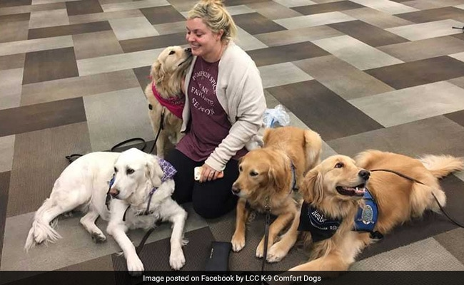 To Vegas With Love: Therapy Dogs Comfort Survivors Of Mass Shooting