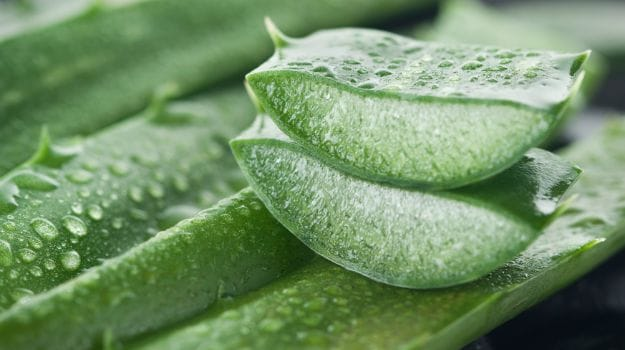 aloe vera has excelling soothing properties