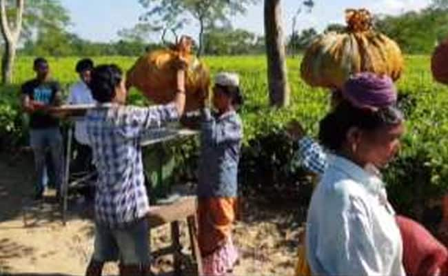 1 Year Of Notes Ban: Being Cashless A Distant Dream In Assam Tea Gardens