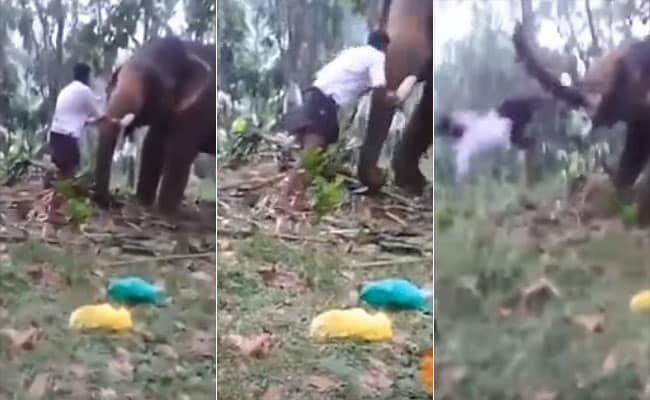 Viral video shows man trying to pull off 'Baahubali' facing elephant's wrath