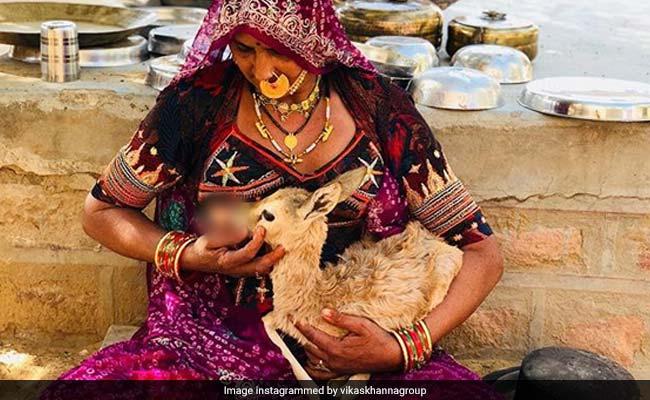 यहां जानवरों को अपना दूध पिलाती हैं महिलाएं, वायरल हो रही है ये PHOTO