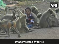 Karnataka Boy Plays With Monkeys Every Day. See Their Unlikely Friendship
