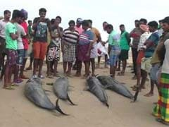 Tamil Nadu Fishermen Worked Into The Night To Save 20 Dolphins
