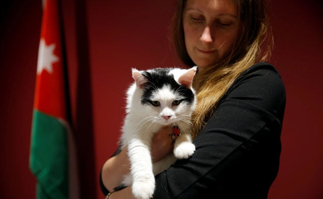 British Embassy Cat In Jordan Appointed Chief Mouser