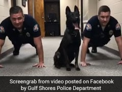 Police Dog Does Push-Ups With Officers In Viral Video