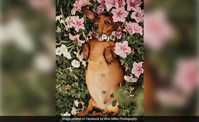 This Pregnant Pupper Had The Prettiest Maternity Photo Shoot