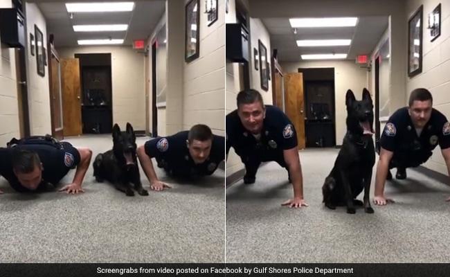 VIRAL VIDEO: पुलिस अफसर को देख यह 'डॉग' भी करने लगा पुश अप, वीडियो देख हो जाएंगे लोट-पोट