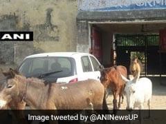 OMG! इस जुर्म में तीन दिन तक गधों और घोड़ों को रखा जेल में बंद