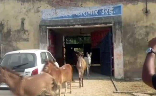 Donkeys Jailed For 4 Days In Uttar Pradesh. Crime? Ate Expensive Plants