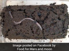 Prospects Of Farming On Mars? Earthworms Bred In Planet's Soil Simulant Obtained By NASA