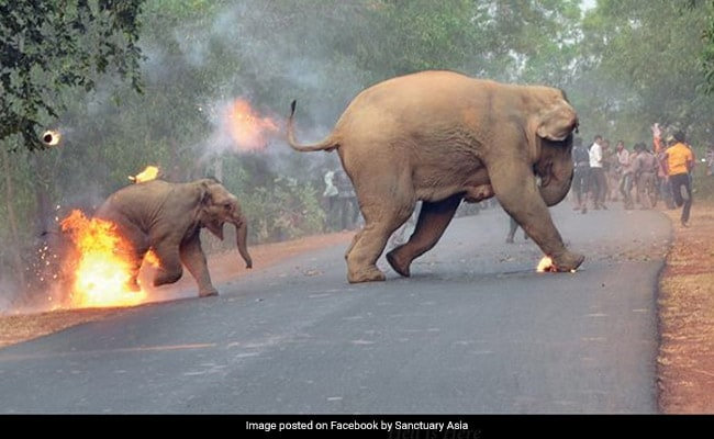 हाथी और उसके बच्चे को लगी आग, जानिए क्या है इस वायरल फोटो की सच्चाई?