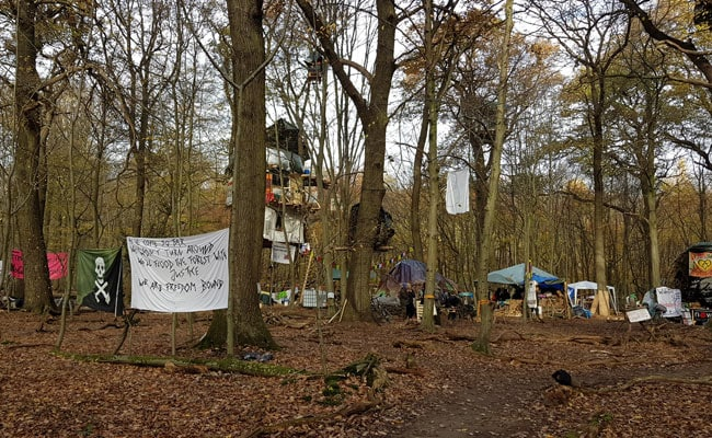 A 'Chipko Movement' In Germany Is Trying To Save Europe's Oldest Forest