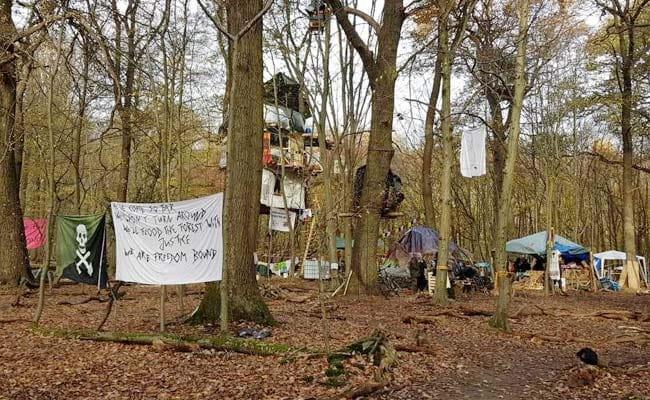 EXCLUSIVE: जर्मनी का 'चिपको' आंदोलन, हमबख के जंगलों को बचाने के लिए पेड़ों पर बनाए घर