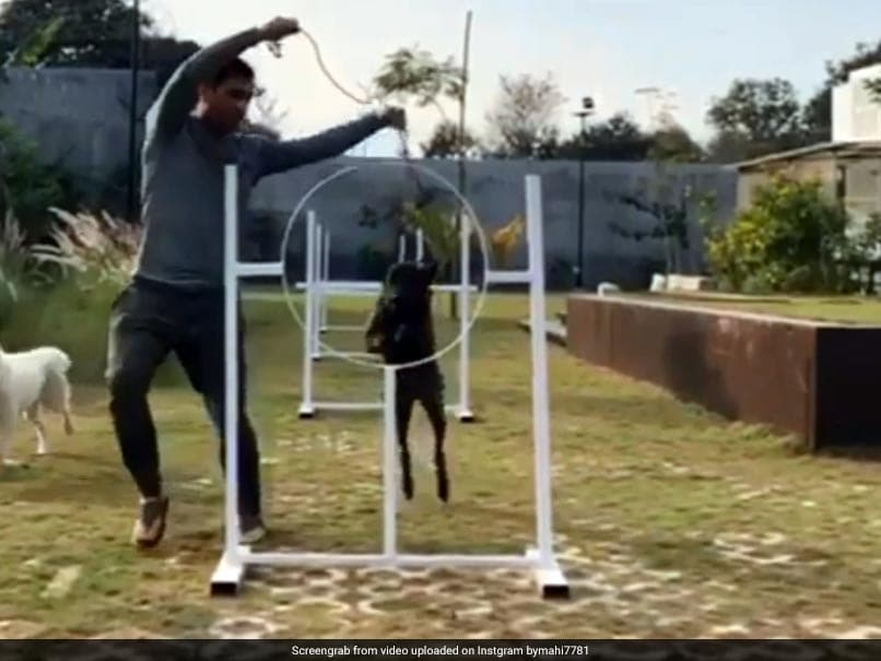 Watch: MS Dhoni Training His Dogs Has Fans Falling In Love With Him (Again)