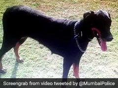 #RIPRuby: Mumbai Police Posts Touching Tribute For Their K-9 Officer