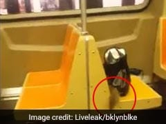New Yorkers Scream, Jump In Horror During Subway Ride. Reason? A Rat