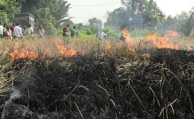 ओडिशा में 'ब्राउन प्लांटहॉपर' ने की फसल बर्बाद, किसान ने दे दी जान