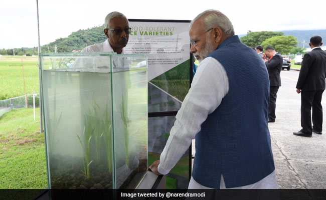 Visiting Rice Research Institute In Philippines, PM Modi Donates 2 Indian Seed Varieties To Gene Bank