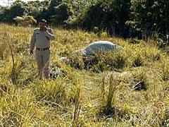 Rhino, Calf Shot Dead In Kaziranga National Park In Assam