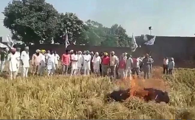 As Arvind Kejriwal Fumes Against Farm Fires, AAP Leader Does It On Camera