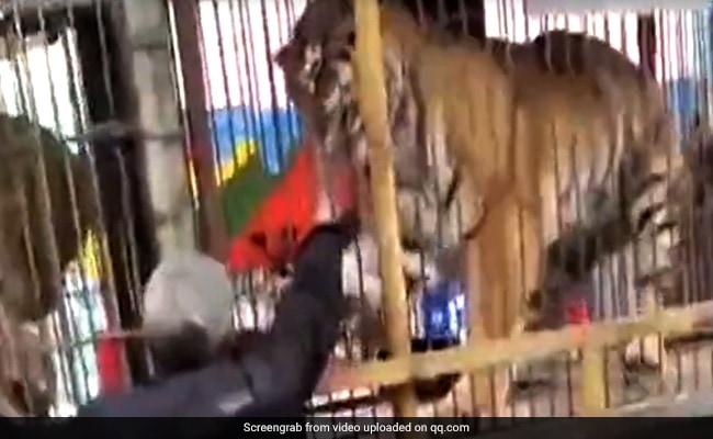 शेर के पिंजरे में हाथ देना पड़ा महंगा, देखें ये Shocking Video