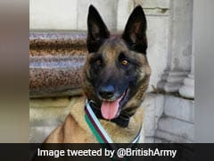 British Military Dog Awarded Medal For Saving Troops In Afghanistan