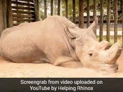 What Extinction Looks Like: Pic Of Last Male Northern White Rhino Goes Viral